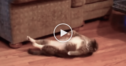 They Looked Over And Noticed Kitty Doing Something Almost TOO Crazy To Believe… OMG?!