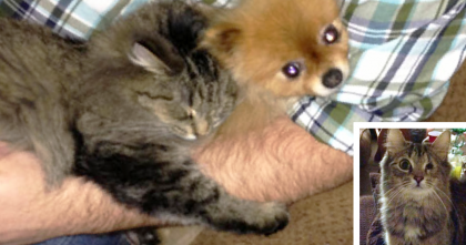 This Man Rescued A Cat, But When You See How She Repays Him… Your Heart Will Melt!