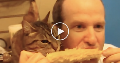 Watch For Only A Few Seconds, You Won't Believe Your Eyes… Just See What This Cat Does!