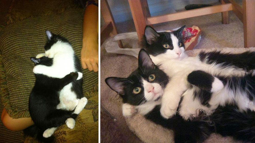 1-before-and-after-growing-up-cats