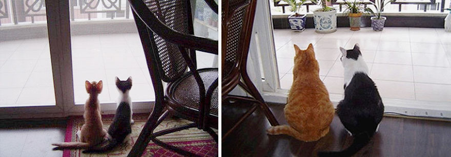 15-before-and-after-growing-up-cats