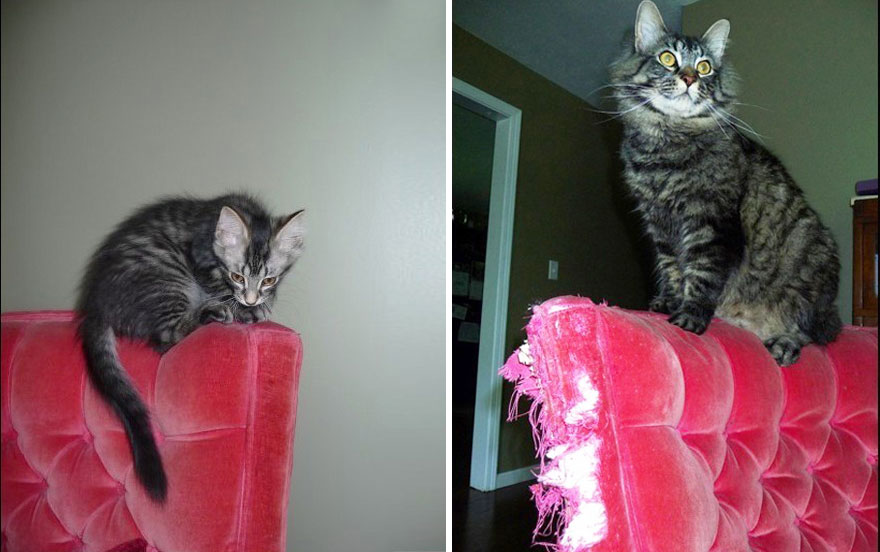 6-before-and-after-growing-up-cats