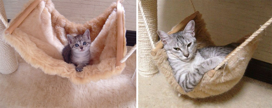 8-before-and-after-growing-up-cats