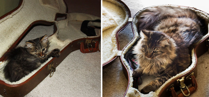 9-before-and-after-growing-up-cats