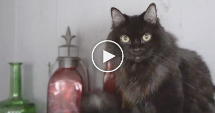 Cat Takes ALL The Jobs In The House, But Watch And See What He Can Do… LOL!
