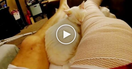 He Broke His Leg, But Now Watch How The Cat Is Caring For Him… It's Just Beautiful, Awww!!