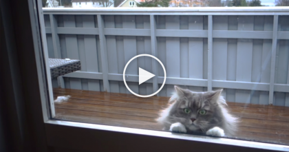 He Thought The Cat Wanted To Be Let In. Wait Till You See What She REALLY Wants!