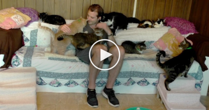 He Walks Into A Room Full Of Kitties, Now Watch What Happens… 'Purrfect' Therapy!