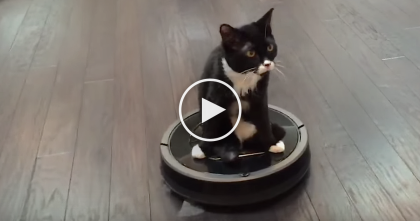 Kitten Lost Two Back Legs And Ditches Wheelchair, Now Watch How He Gets Around