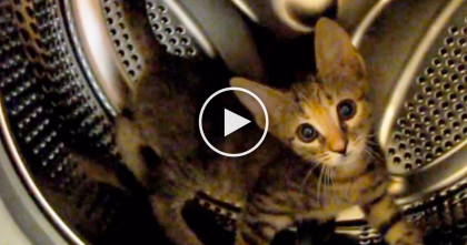 Kitty Discovers Washing Machine, But Watch What He Does Next… It's Just Hilarious!