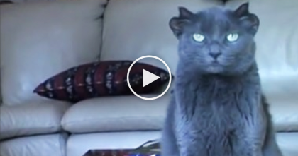 Nobody Wanted This Cat Because He Looked Weird… Just Watch And See His Ears, WHOA.