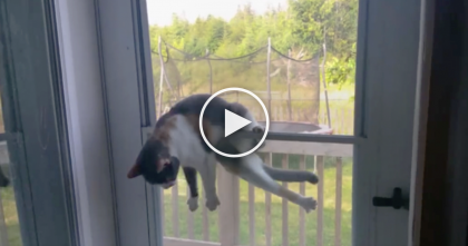She Noticed Something Stuck To Her Front Door, But Then She Took A Closer Look… OMG!