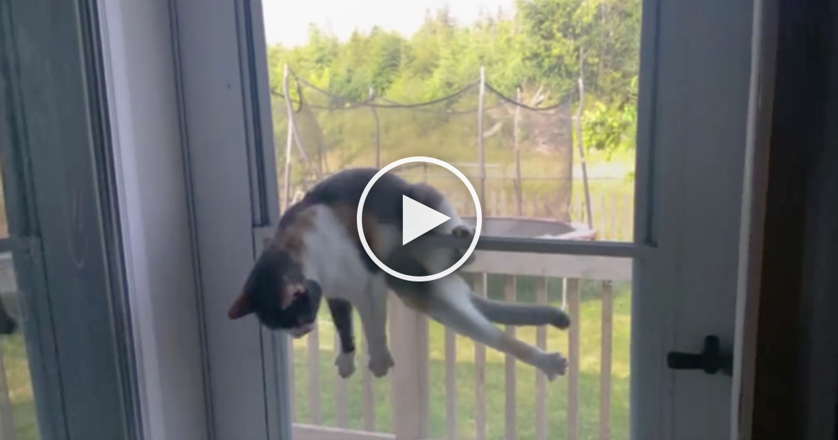 She Noticed Something Stuck To Her Front Door But Then She Took A Closer Look\u2026 OMG! | The Meow Post & She Noticed Something Stuck To Her Front Door But Then She Took A ...