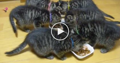 They Gave These Kittens Some Food, But Just Listen To Their Response… Oh My!!