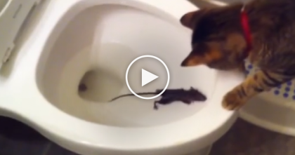 They Were Horrified They Saw A Rat In The Toilet, But Then Someone Saved The Day, WATCH.