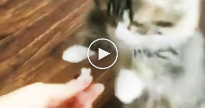 This Little Kitten Wants Fish Snack, But Watch What He Does To Get It… SOO Cute!!
