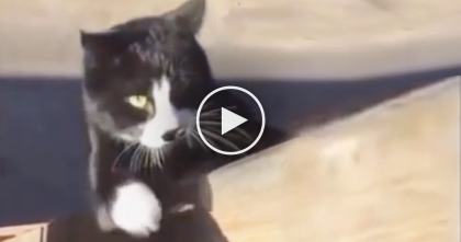 Watch Slow-Motion Ninja Cat Climbing Straight Up Unbelievable Vertical Post, WOW.