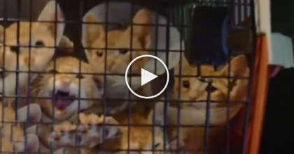 Cats Face Death Row, But When You See What They're Doing Now… It's Amazing, Just Watch.