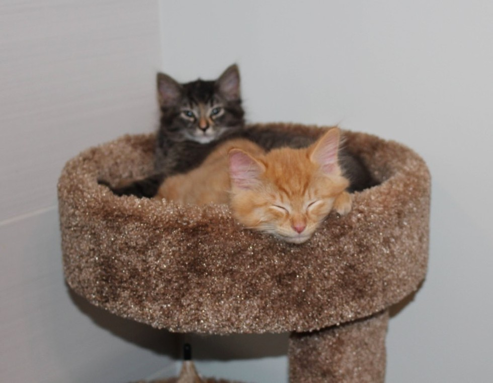 1_Kittens_in_Bed