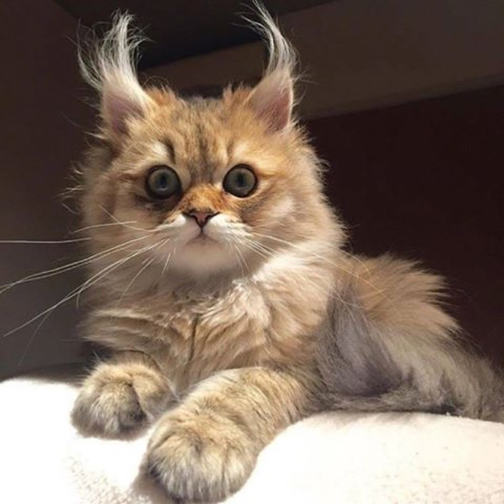 Cat With Ears Down
