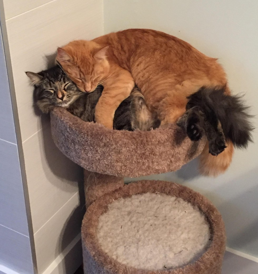 5_Cats_Share_Little_Bed