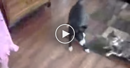 Dog Is Tormenting The Kids, But When The Cat Notices?? You Won't Believe What They Recorded!