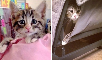 See This Kitty?? You Won't Believe Your Eyes When You See His Permanently Worried Eyes…