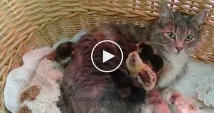 Calico Kitty Notices 4 Tiny Baby Birds, But When You See What She Does Them…OMG