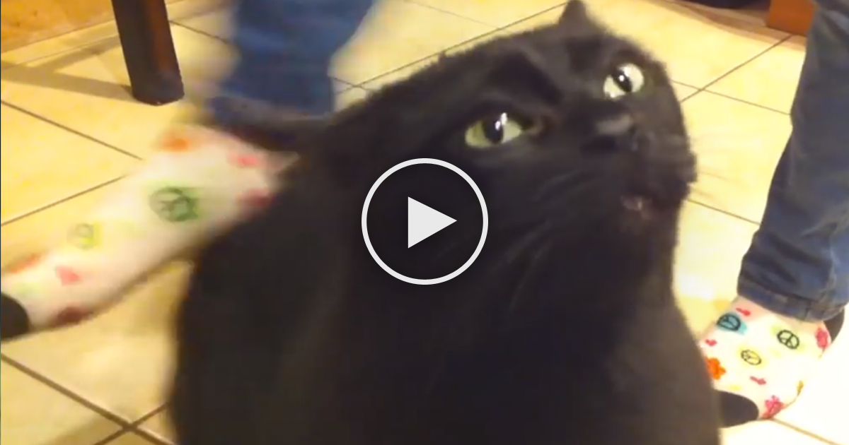 Cat Sings When Back Scratched