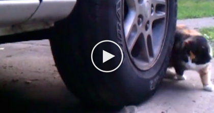 Cat Keeps Going In Circles Around The Tire, But Then You See It… And It NEVER Stops, LOL.