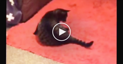 "Cat Notices His Own Tail Acting A Little ""Strange"", But What He Does Next?? Just Watch, LOL!!"