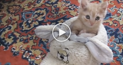 Ginger Kitten Finds His Favorite Place In The House, But Then At 1:27… OMG, Too Cute!
