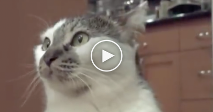 "He Asks His Cat ""What's Going On?"" But Just Listen How The Cat Responds Back To Him…SOO Funny!!"