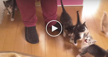 It's Lunch Time For These Little Kittens, But You Can't Miss The Response, Omg… Just Watch!