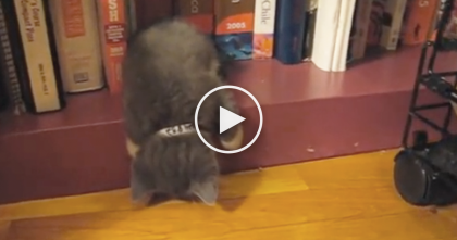 Kitten Gets Tired, But Then Chooses The Weirdest Place To Sleep, Just WATCH And See…