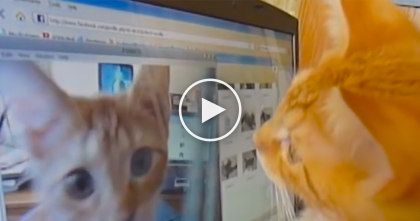 Kitten Notices Himself In The Screen, But Watch What His Expression… Just Hilarious!!