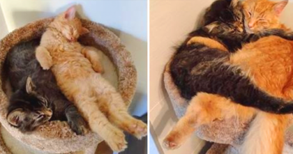 These Kittens Are Snuggling Together, But Wait Till You See The Last Picture… OMG, Awwwww!!