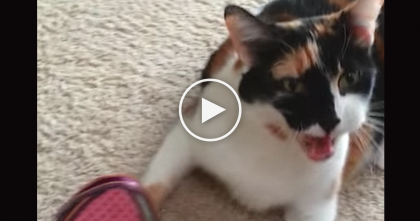 Kitty Throws A Temper Tantrum For The Most Surprising Reason… LOL, I Didn't Expect That!