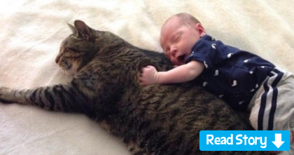 See The Reaction When Baby Discovered The Cat For The First Time… Your Heart Will Explode!