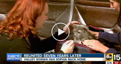 She Lost Her Cat 7 Long Years Ago, But When They Discover Where She Is… Now I'm In Tears