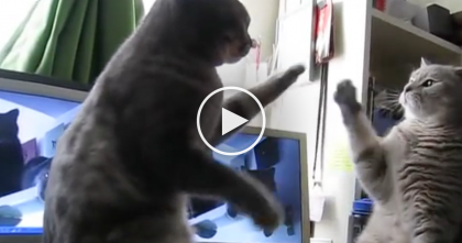 She Noticed Her Cats Doing Something Hilarious, So She Grabbed The Camera…WATCH What Happens!