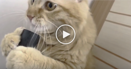 She Turns On The Vacuum, But Watch How The Cat Reacts… I've NEVER Seen A Cat Do This!