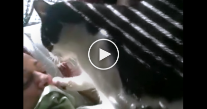 She's Trying To Sleep, But It's Impossible… Now Watch And See The Reason Why, TOO Cute!