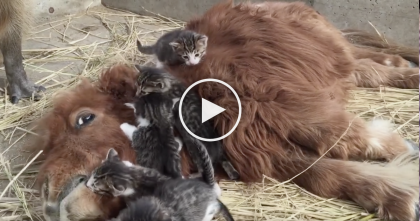 These Kittens Discover Some New Friends, First Thing That Happens… Just Watch The Reaction!