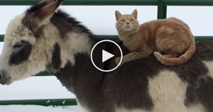 They Noticed This Cat Doing Something Very Bizarre, When They Took A Closer Look… OMG.