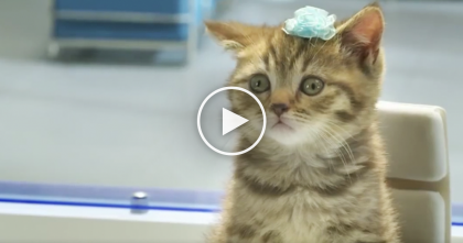 This Brilliant French Ad Will Make You Fall In Love With Cats Even More… Just Watch, It's GENIUS!