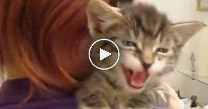 Tiny Kitten Starts Cutest Conversation…But How She Responds To Mom's Questions? Listen To THIS!
