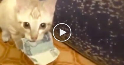 "Tiny Kitten Thief Is Very Protective Of His ""LOOT"" Watch What He Does… Now I Can't Stop Laughing!!"