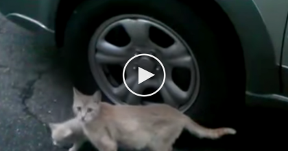 Watch: Mama Cat Rescues A Sick Kitten!