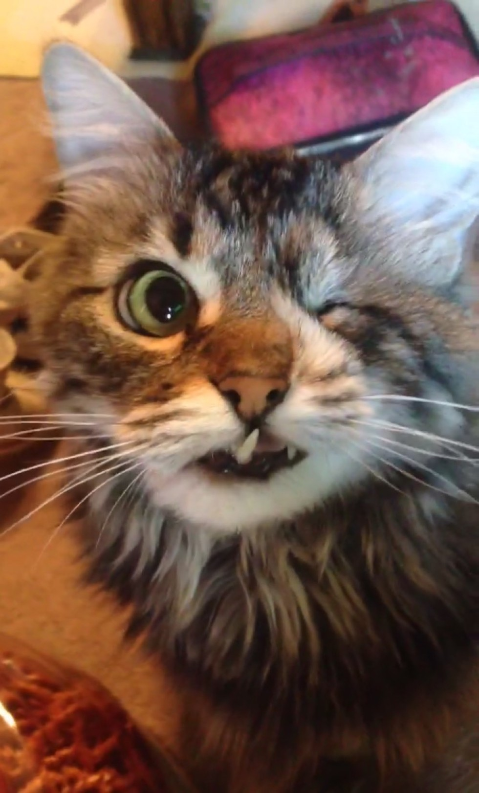 3_Snaggle_Toothed_Kitty